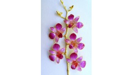 Orchid Stalk