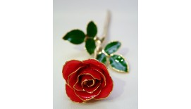 Rose Stalk Red